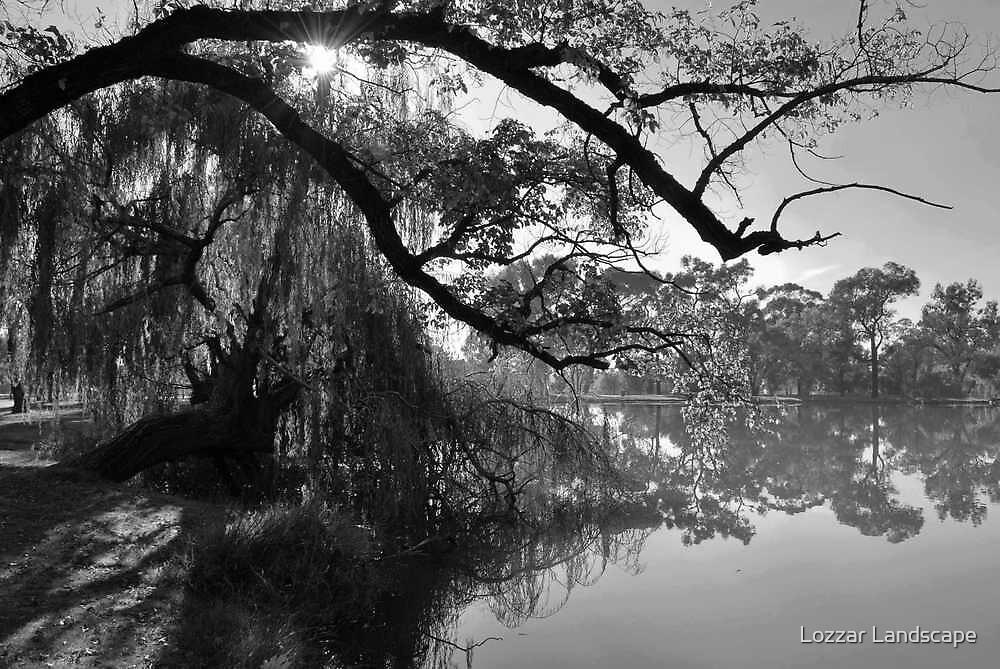 Willow Sunburst by Lozzar Landscape