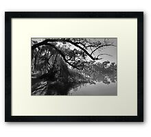 Willow Sunburst Framed Print