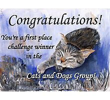 Banner for 1st place challenge winner in Cats and Dogs Group Photographic Print