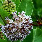 Milkweed and 2 friends by flowers2love