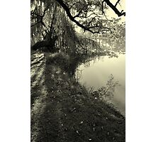 Willow Weeping Photographic Print
