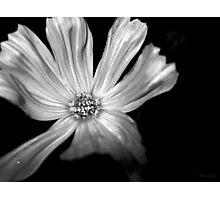 White Soul Photographic Print
