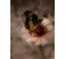 Sweet Butterfly Photographic Print