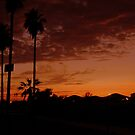 Palms Sunset by Maria Hernandez