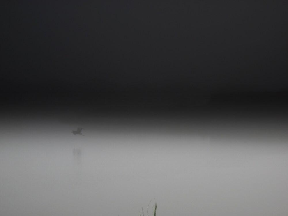 Mist Lake  by Maria Hernandez