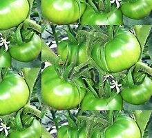 Green Tomatoes Two by Sharon Thorp