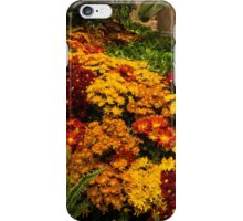 The Richness of Autumn - an Exuberant Display of Chrysanthemums  iPhone Case/Skin