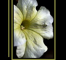 Get Well Soon - White and Green Flower by Joy Watson