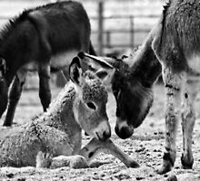 A Bit of Burro Encouragement by Corri Gryting Gutzman