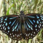 Obliging butterfly by valandsnake