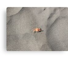Little Crab in The Sand Metal Print