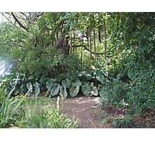St Kitt jungle Photographic Print