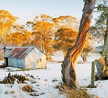 Howitt Hut, Alpine National Park, Victoria, Australia by Michael Boniwell