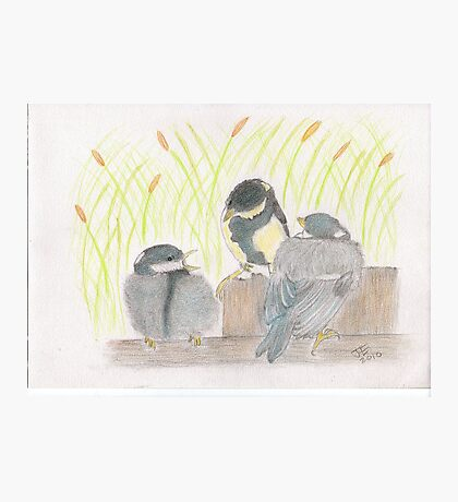 """""""chatter! chirp! chirp""""   for JD Photographic Print"""