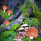 Fungi Family by Elaine Short