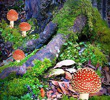 Fungi Family by Elaine Short