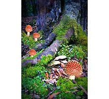 Fungi Family Photographic Print