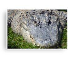 American Alligator Basking Canvas Print