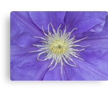 Clematis blue Canvas Print