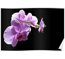 The wonder of orchids Poster