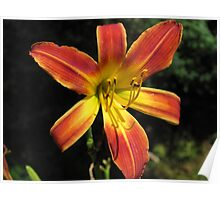 Day Lily of Many Colors Poster