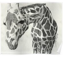 A giraffe in pencil Poster