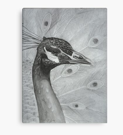 A peacock in pencil Canvas Print