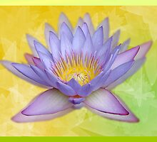 Lotus Ghosts by Caryn Colgan