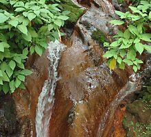 forest stream by bayu harsa