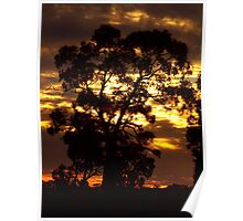 Red Gum Sunset Poster
