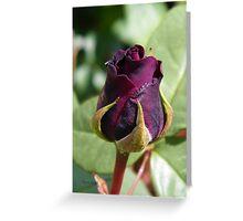 Rose Bud ... Dark Red Greeting Card