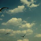 Seagulls at the Beach by Annabelle Nordquist