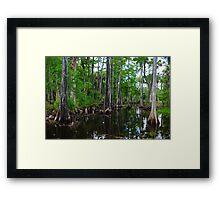 Cypress Swamp Riverbend Park Jupiter,Fl. Framed Print
