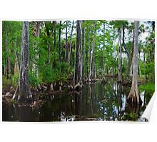 Cypress Swamp Riverbend Park Jupiter,Fl. Poster