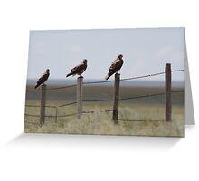 Swainson's Hawk Fledglings Greeting Card