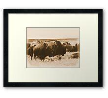 Bison Herd-Blue Mounds State Park, Luvern, Mn Framed Print