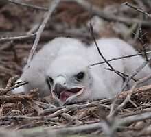Ground Nest Baby by Jillian Johnston