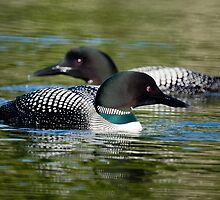 Two Loons by Jane Best