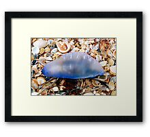 Man-o-War Framed Print