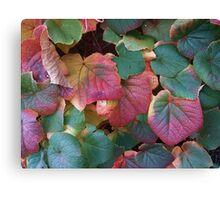 Coloured leaves 2 Canvas Print