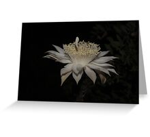 Queen of the Night Greeting Card