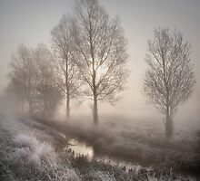 Willows in the Mist by Kathy Wright