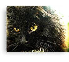 Kitten. Canvas Print