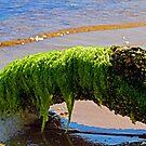 Sunbathing Seaweed by Terri~Lynn Bealle