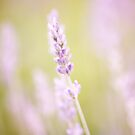 Lavender summer by Eliza1Anna