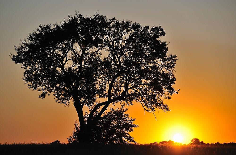 Sunset 2 by Kasia Nowak