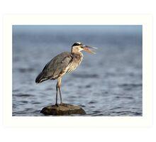 Gag Reflex / Great Blue Heron Juvenile Art Print