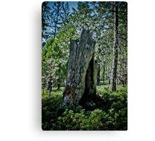 forest  rebirth Canvas Print