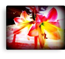 Lily Rays Canvas Print