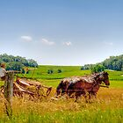 Harvest Time by ECH52